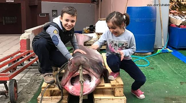 Tekirdağ Açıklarında 2 Köpek Balığı Yakalandı
