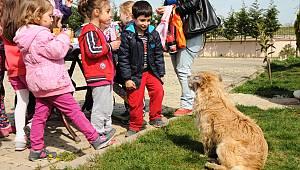 """Süleymanpaşa Belediyesi'nden """"Mutlu Pati Şenliği"""""""