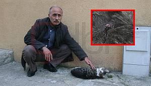 Kedileri Havalı Tüfekle Vurdular
