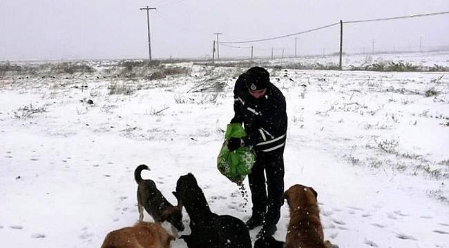 Sokak Hayvanları Yalnız Değil
