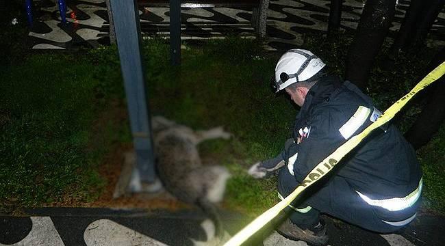 Elektrik Akımına Kapılan Köpek Öldü