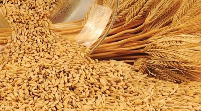 Buğday Alım Fiyatı Belli Oldu