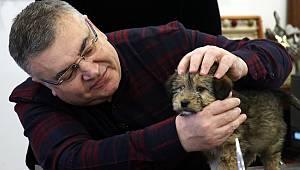 Başkan Kesimoğlu Makamını Sokak Köpeğine Açtı