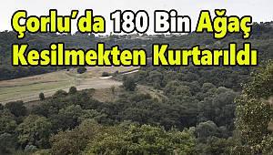 Çorlu'da 180 Bin Ağaç Kesilmekten Kurtarıldı