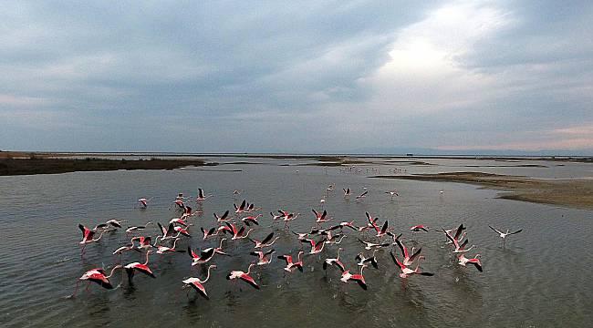Flamingolar Gala Gölü'nü Renklendiriyor