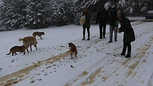 Kar Yağışı Sonrası Belediye Sokak Hayvanlarını Unutmadı