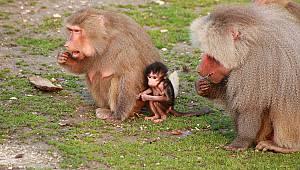 Karnesini Getirene Hayvanat Bahçesi Ücretsiz