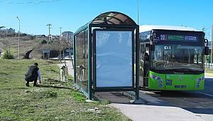 Otobüs Şoförleri Karşılaştıkları Sokak Hayvanlarına Mama Veriyor