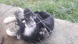 TellereSıkışan Köpeği İtfaiye Kurtardı