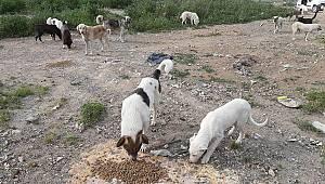 Ayvalık'ta Sokak Hayvanları İçin 3 Ton Mama Bırakıldı