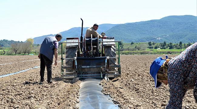 Bilecikli Çiftçilerin Karpuz Fidesi Mesaisi
