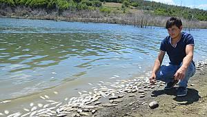 Barajda Ölü Balıklar Kıyıya Vurdu