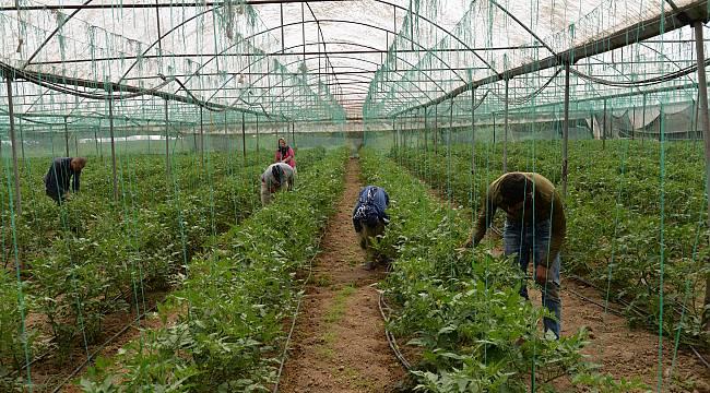 Tarım İşçileri İftar Saatine Kadar Seralarda Ter Döküyor