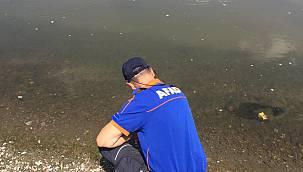 Onlarca Hayvan Telef Olmuştu Meriç Nehri'nden Alınan Su Numunesi Temiz Çıktı