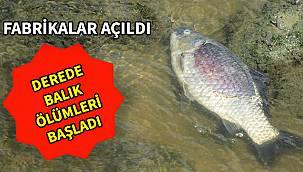 Fabrikalar Açıldı, Derede Balık Ölümleri Başladı