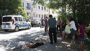 Keşan'da Zehirlendiği İddia Edilen 5 Köpekten 1'i Telef Oldu