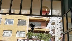 Kuşlar İçin İş Yerinin Camını Kırdı