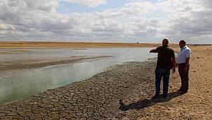 Su Seviyesi Düşen Gölette Oksijensiz Kalan Yüzlerce Balık Telef Oldu