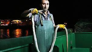 Atlantik Okyanusu'nun Dikenli Yılan Balığı Çanakkale Boğazı'nda Yakalandı