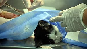 Hayvansever Kadınların Kurduğu Klinikte Sokak Hayvanları Ücretsiz İyileştiriliyor