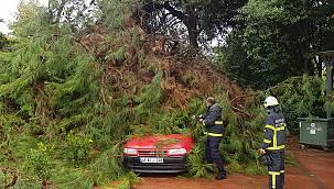 Kocaeli'de Üzerine Ağaç Devrilen Otomobilde Hasar Oluştu
