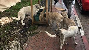 Demirköy Belediyesinden Sokak Hayvanlarına Mama Desteği