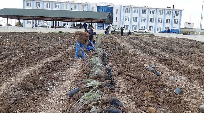 """Edirne'de Kurutulan Bataklıkta """"Aromatik Bitkiler Bahçesi"""" Oluşturuldu"""