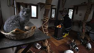 Bursa'da Sahipsiz Kediler Villadaki Sobanın Başında Kışın Tadını Çıkarıyor