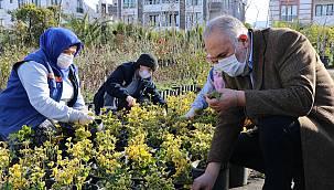 Çiftlikköy Belediyesi, Seralarında Ürettiği Peyzaj Bitkileriyle İlçeye Renk Katıyor