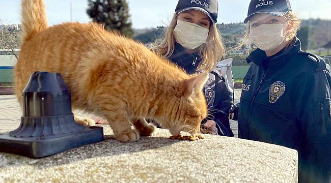 Kısıtlamada Sokak Hayvanlarını Yalnız Bırakmadılar