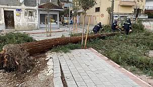 Sakarya'da Fırtına ve Şiddetli Rüzgar Mahalleyi Elektriksiz Bıraktı