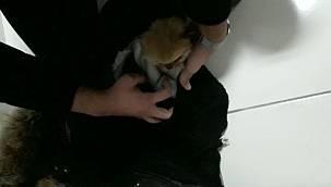 Yavru Köpekleri İlaçla Uyup Kabanın Astarına Saklamışlar