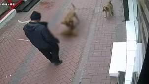 Balıkesir'de Köpeklerine 20 Kediyi Boğdurtan Kişi Gözaltına Alındı