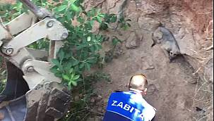 Tuzla'da 4 Metrelik Çukura Düşen Köpeği Zabıta Kurtardı
