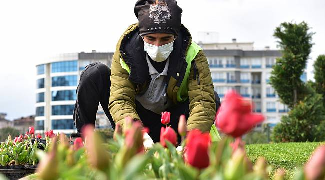 Tuzla Belediyesi, Baharın Gelmesiyle Kendi Yetiştirdiği Lalelerle İlçeyi Süsledi
