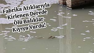 Fabrika Atıklarıyla Kirlenen Derede Ölü Balıklar Kıyıya Vurdu!