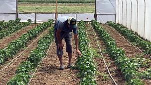 Kocaeli'de Çiftçilerin Yüzü Sera Desteğiyle Güldü