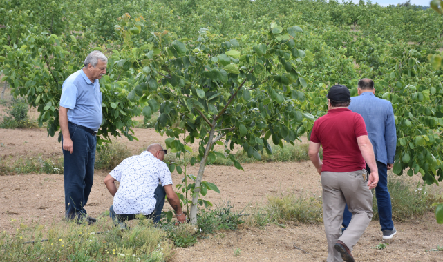 1200 Rakımlı Yaylada Kurulan Ceviz Bahçesi Ekonomisine Katkı Sağlıyor