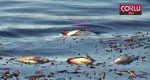 Göletteki Balık Ölümleri vatandaşı Tedirgin Etti