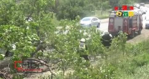 Seyir Halindeki Otomobilin Üzerine Ağaç Devrildi